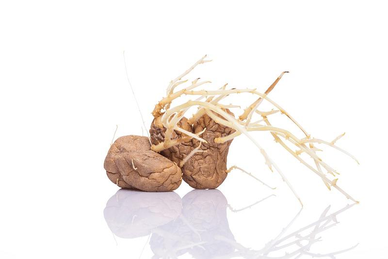 Покълнали картофи